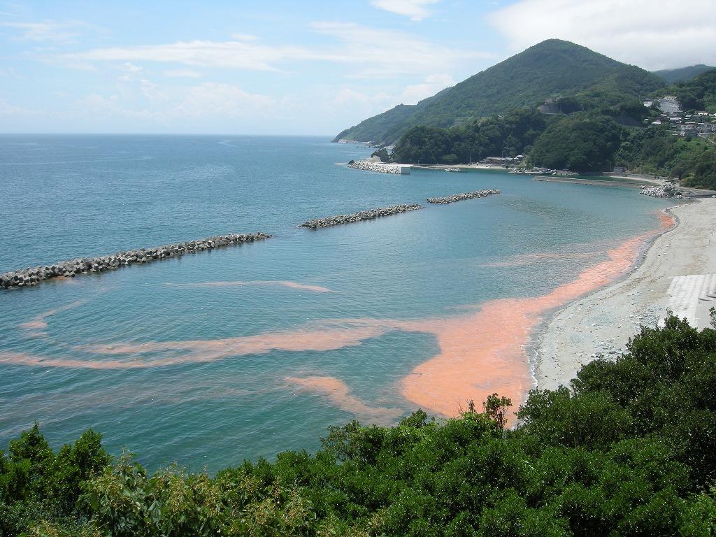 海の環境問題