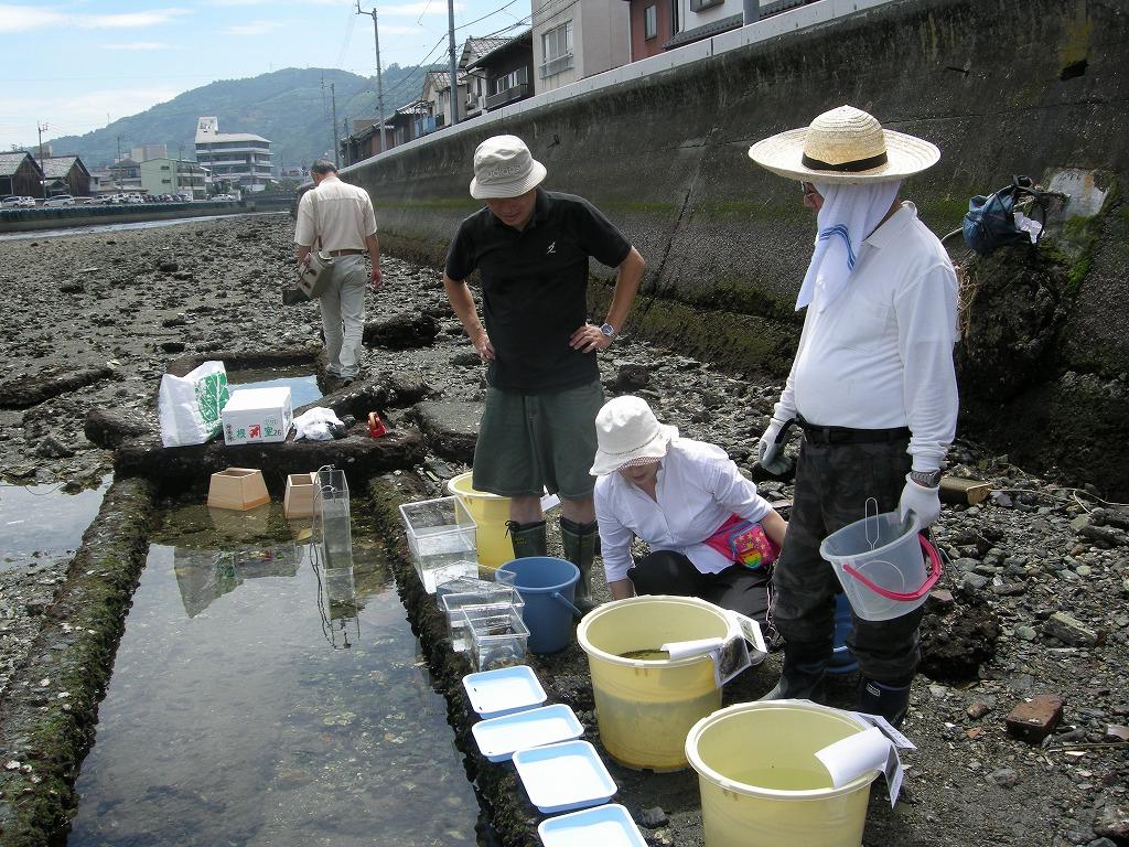 魚の調査風景
