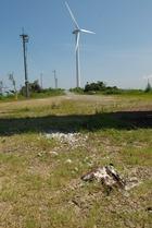 風車エネルギー・・・