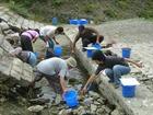 千丈川渇水・生物移動作戦