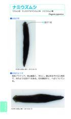 09-010-ナミウズムシ